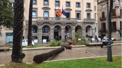 La fuerza de Hortense tumba cuatro palmeras del Paseo Marítimo
