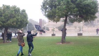 La tormenta deja 110 avisos por incidentes en Palma y cierre de parques públicos