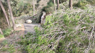 Cortes de tráfico en las carreteras de Calvià a Establiments y de Artà a Betlem