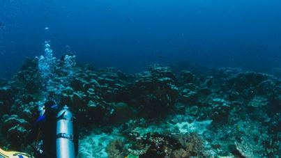 Una especie marina de Ibiza, clave en la investigación del antiviral español contra la Covid