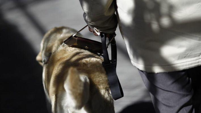 El Parlament modifica la ley de perros de asistencia y amplía su uso a personas con diabetes, epilepsia o autismo
