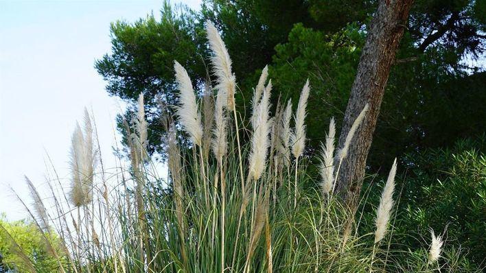 Detectan 545 especies invasoras en Baleares