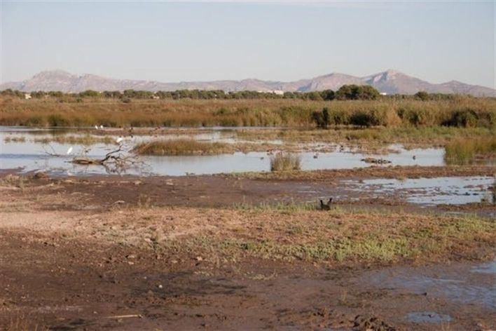 El Govern amplía en un 24 por ciento la protección del Parque Natural de S'Albufera