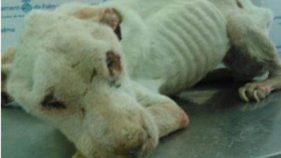 El anteproyecto de Ley de Enjuiciamiento Criminal elimina la acusación popular en los delitos de maltrato animal