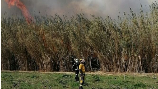 Incendio de cañizo en el Torrent de Sant Miquel