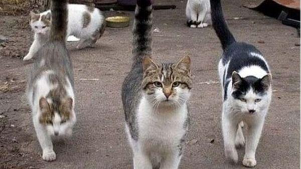 Sant Josep deja en manos de los cazadores la captura de gatos callejeros