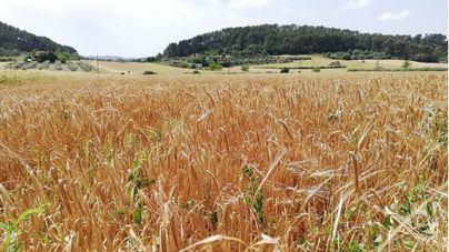 El Govern prepara un decreto para regular las agroestancias pese a la oposición de los agroturismos