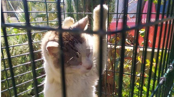 Los Bomberos de Palma rescatan a un gato que había caído al fondo de un pozo
