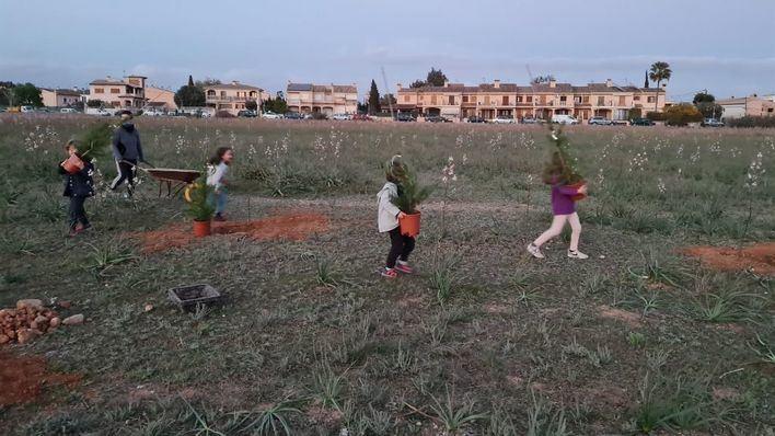 Vecinos de Son Bonet plantan 20 pinos en la zona contra el parque fotovoltaico de Aena