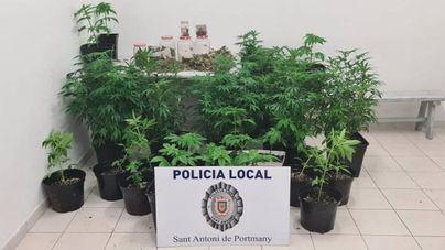 Descubren una plantación de marihuana al dejar sus dueños abierta la puerta de la vivienda