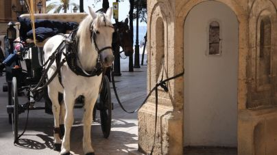 Progreso en Verde exige a Cort el cambio de ordenanza de los caballos de las galeras