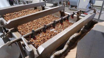 El Consell de Mallorca visibiliza los beneficios de producir y consumir productos locales