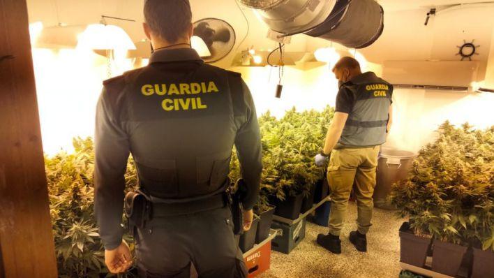 Un detenido en s´Arenal con 400 plantas de marihuana en una vivienda