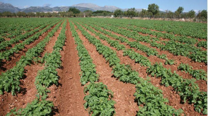 El Consell de Mallorca destinará 1 millón de euros a proyectos en favor del producto local