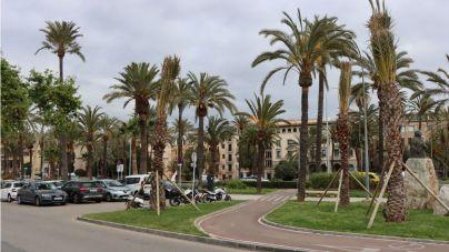 La APB repone veinte palmeras del puerto de Palma a punto de caer