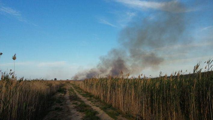 Un incendio calcina una hectárea de cañar en una zona forestal de sa Pobla