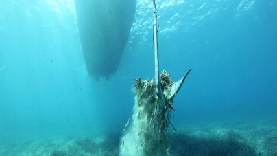 El ocho por ciento de barcas fondea sobre posidonia, según el conseller Mir