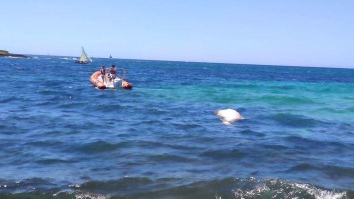 Aparece un cachalote muerto en aguas de Es Carnatge