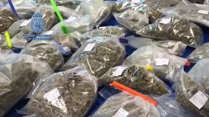 Seis detenciones en Ibiza tras la incautación de droga en un club de cannabis