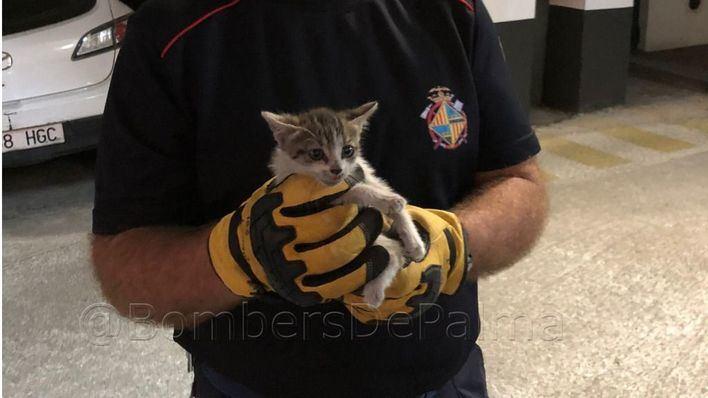 Los Bomberos de Palma rescatan a un gato de pocos meses del interior del motor de un coche