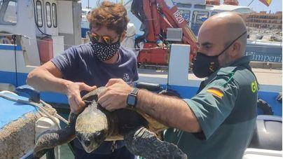 La Guardia Civil rescata una tortuga con problemas de flotabilidad