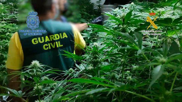 Cae la rama madrileña de los narcos asentados en Palma detenidos a principios de año