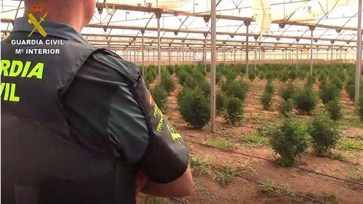 La Guardia Civil desmantela una macroplantación de marihuana en Es Pil·larí
