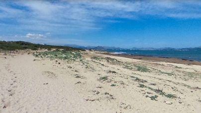 Limpieza solidaria de la playa Na Patana de Can Picafort