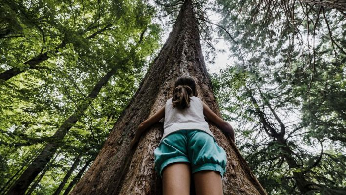 CaixaBank lanza la 'Convocatoria de Medioambiente' para apoyar proyectos de mejora del patrimonio natural