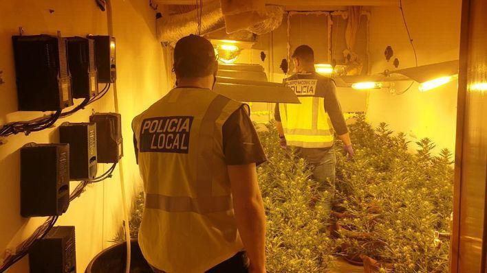 Guerra contra la marihuana en Palma: 500 plantas incautadas en diez días