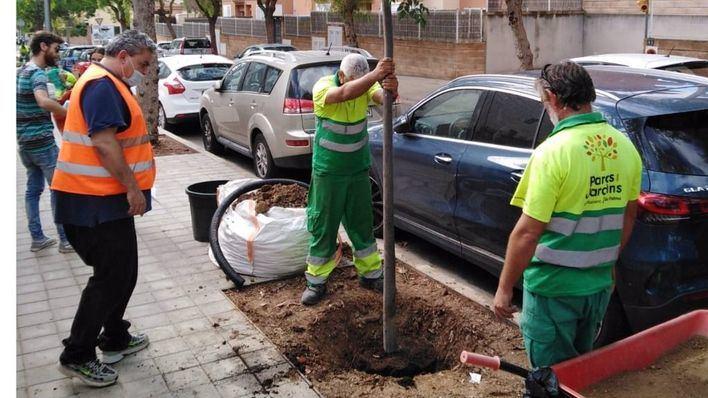 Cort reanuda las siembras de árboles con una intervención en Son Rapinya