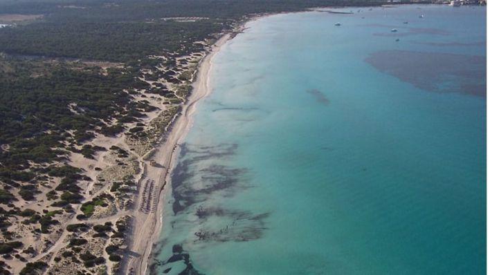 La costa ha retrocedido 13,5 metros en Es Trenc en los últimos 65 años