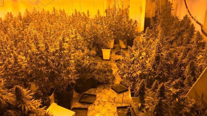 Podemos anuncia una ley para despenalizar el uso del cannabis en adultos