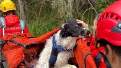 Los bomberos rescatan a un perro herido en Esporles