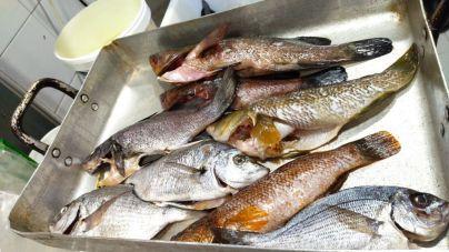 La conselleria denuncia a un restaurante de Palma por tener pescado arponado y de talla inferior a la permitida