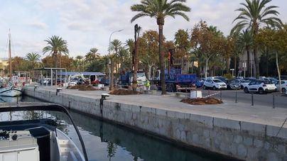 La APB repone las palmeras con riesgo estructural en el puerto de Palma