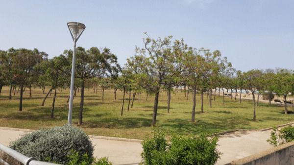 El parque de Son Parera no será de convivencia pero se mejorará el espacio de ocio canino