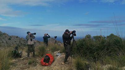 Unos 70 voluntarios ayudan a elaborar el censo de ejemplares de buitre negro en Mallorca
