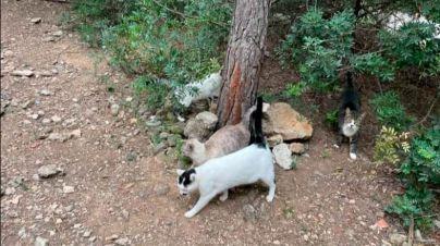 Acusan a Angélica Pastor de querer deshacerse de los gatos de Bellver