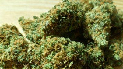 El Consell d'Eivissa se pronuncia a favor del consumo de cannabis
