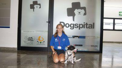 El programa Dogspital de Can Misses, galardonado por una fundación asturiana