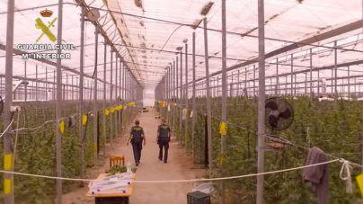 La Guardia Civil interviene 42.000 plantas de marihuana en Almería
