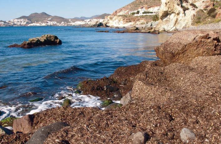 Ecologistas en Acción pide no limpiar los