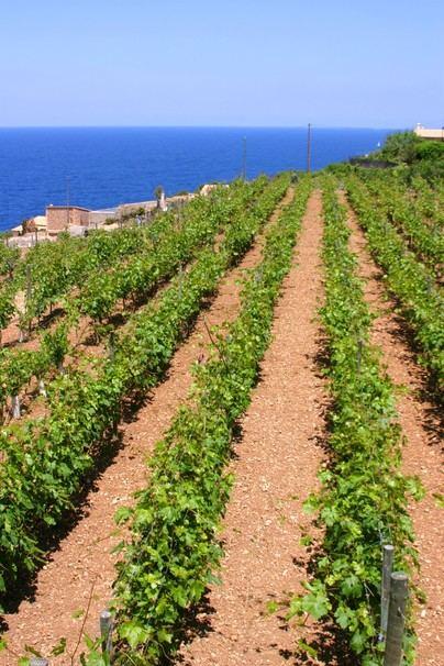 Más de 160 agricultores de la Serra recibirán 1,34 millones de euros de ayudas del Fogaiba