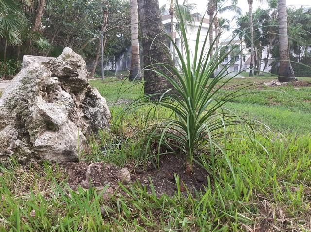 El Grupo Piñero contribuye a frenar el cambio climático plantando más de 3.000 árboles en México y República Dominicana