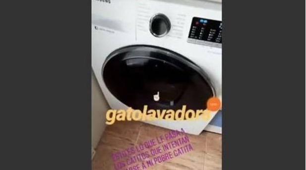 Detenida tras matar a su gato en la lavadora y colgar el vídeo en internet
