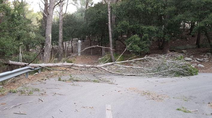 El fuerte viento provoca 160 incidentes en Baleares, la mayoría en Palma