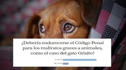 Un 85,5 por cien de encuestados, a favor de endurecer las penas por maltrato animal