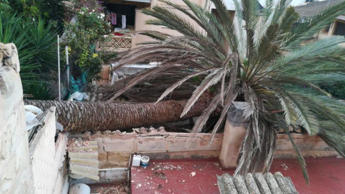 Una palmera se desploma sobre una vivienda de s'Arenal