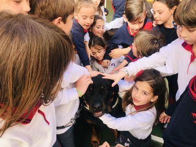 Los alumnos de Sant Josep Obrer le buscan hogar a perros abandonados